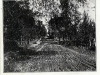 Avenue Pine Hill vers 1900-1905