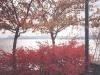 2000 (around) - Magog durant l'automne